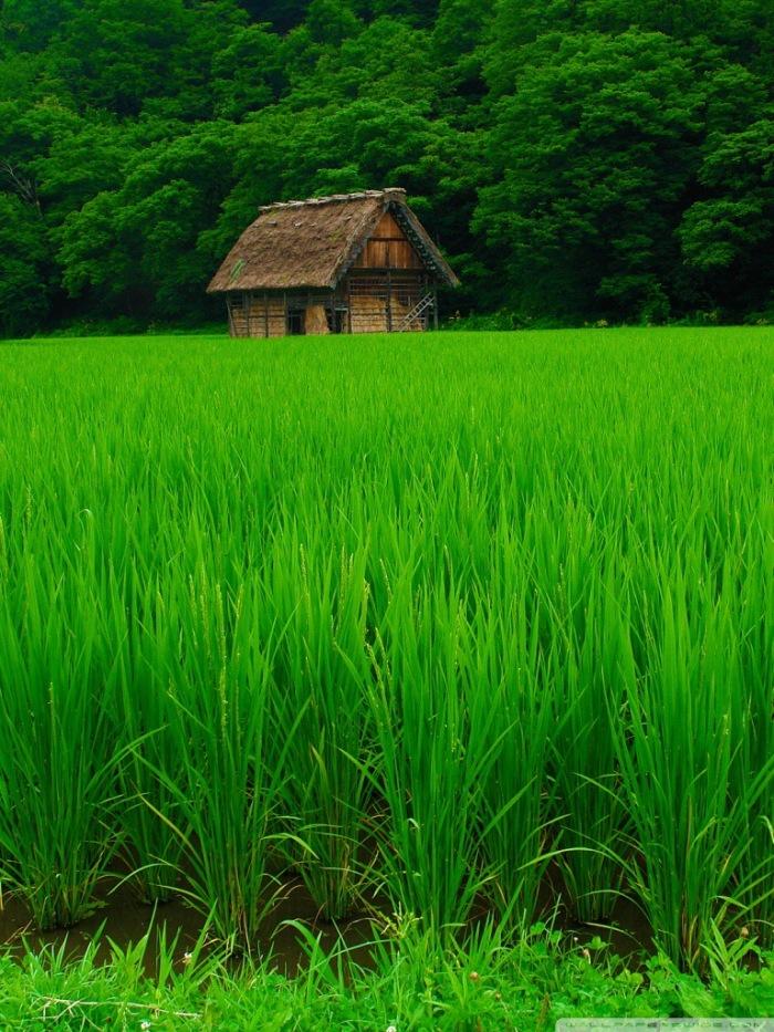 Văn Hóa ở đất nước Nhật Bản - thật đáng để suy ngẫm Img_4052
